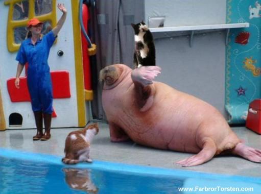 Slumpa fram roliga djur.