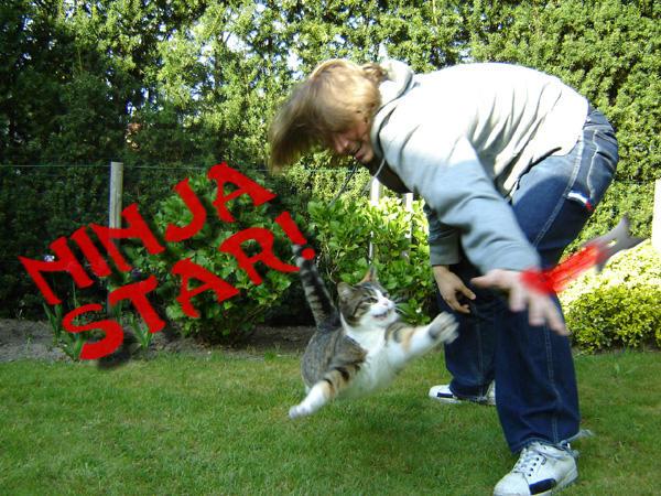 Slumpa fram roliga bilder på katter och hundar.