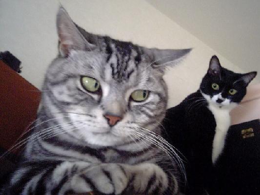 Två roliga katter tittar miss-tänksamt mot varandra.