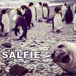 En selfie som är en sälfie.