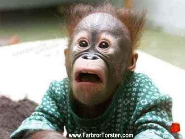 Webbens mest förvånade apa är en riktigt rolig djurbild.