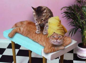 Katt som får katten så bra massage på kattspa. Av alla roliga bilder på katter jag sett är detta en av de mysigaste.