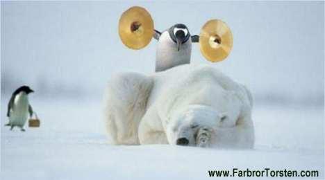 Roliga djurbilder finns det gott om, men det finns inga pingviner på Nordpolen där isbjörnarna bor. Vad förvånad den blir när den vaknar.